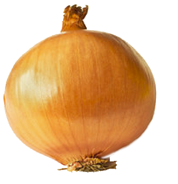 onion whole copy.png